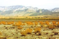 Ξηρές εγκαταστάσεις στη σαβάνα Άμμος Τα βουνά ξηρασία οργασμός Ταξίδι στοκ εικόνα με δικαίωμα ελεύθερης χρήσης