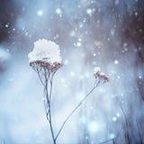 Ξηρές εγκαταστάσεις στο χιόνι το χειμώνα δασικός χειμώνας ήλιων φύσης Στοκ Φωτογραφίες