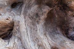 ξηρές ρίζες Στοκ εικόνες με δικαίωμα ελεύθερης χρήσης