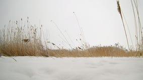Ξηρές ταλαντεύσεις χλόης στον αέρα σε έναν τομέα το χειμώνα φιλμ μικρού μήκους