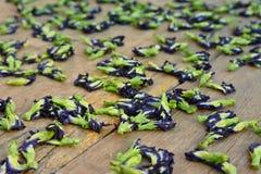 Ξηραμένα από τον ήλιο λουλούδια μπιζελιών πεταλούδων Στοκ Φωτογραφία