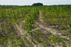 Ξηρασία στη βόρεια Φρεισία στοκ εικόνα