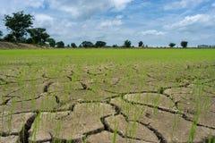 Ξηρασία τομέων ρυζιού στοκ εικόνα με δικαίωμα ελεύθερης χρήσης