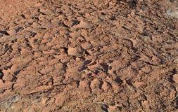 ξηρασία Στοκ Εικόνα
