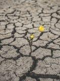 ξηρασία στοκ φωτογραφίες