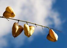 Ξηροί καρποί φθινοπώρου ενάντια στον ουρανό Στοκ Φωτογραφία