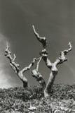 Ξηροί κορμοί δέντρων Στοκ φωτογραφία με δικαίωμα ελεύθερης χρήσης