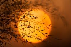 Ξηροί κλάδοι ενάντια στον ήλιο βραδιού Κλάδοι των φυτών με τα φύλλα στο ηλιοβασίλεμα Στοκ εικόνες με δικαίωμα ελεύθερης χρήσης