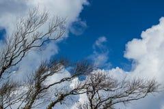 Ξηροί κλαδίσκοι με το μπλε ουρανό Στοκ φωτογραφία με δικαίωμα ελεύθερης χρήσης