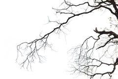 Ξηροί κλαδίσκοι Στοκ φωτογραφία με δικαίωμα ελεύθερης χρήσης