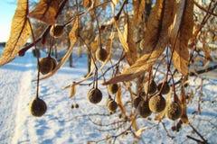 ξηροί σπόροι Στοκ εικόνα με δικαίωμα ελεύθερης χρήσης