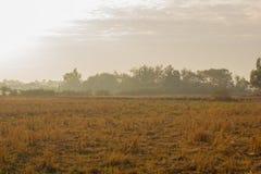 Ξηροί τομείς ρυζιού Στοκ φωτογραφίες με δικαίωμα ελεύθερης χρήσης