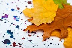 Ξηροί φύλλα φθινοπώρου και λεκέδες watercolor Στοκ εικόνες με δικαίωμα ελεύθερης χρήσης