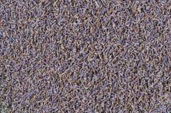 Ξηροί lavender οφθαλμοί λουλουδιών Στοκ εικόνα με δικαίωμα ελεύθερης χρήσης