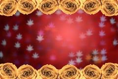 ξηρός άσπρος αυξήθηκε πλαίσιο στο κόκκινο φύλλων σφενδάμου θαμπάδων bokeh Στοκ φωτογραφία με δικαίωμα ελεύθερης χρήσης