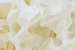 Ξηρός άσπρος στενός επάνω μυκήτων ζελατίνας Στοκ Φωτογραφίες