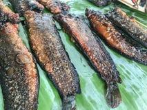 ξηρός αλατισμένος ψάρια ήλ&iota Στοκ Εικόνα