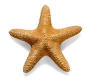 Ξηρός αστέρι ή αστερίας θάλασσας στο λευκό Στοκ Φωτογραφίες