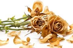 Ξηρός αυξήθηκε λουλούδι Στοκ Εικόνες