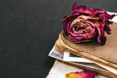 Ξηρός αυξήθηκε, παλαιό βιβλίο και κενή φωτογραφία ως ρωμανική μεταφορά Στοκ Εικόνα