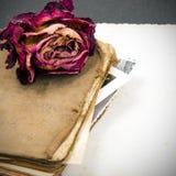 Ξηρός αυξήθηκε, παλαιό βιβλίο και κενή φωτογραφία Στοκ φωτογραφίες με δικαίωμα ελεύθερης χρήσης