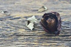 Ξηρός αυξήθηκε στον παλαιό ξύλινο πίνακα, σπασμένη έννοια καρδιών Στοκ εικόνα με δικαίωμα ελεύθερης χρήσης