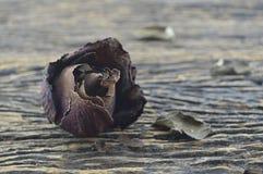 Ξηρός αυξήθηκε στο ξύλινο υπόβαθρο, σπασμένη έννοια καρδιών Στοκ Εικόνα
