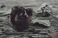 Ξηρός αυξήθηκε στο παλαιό ξύλινο υπόβαθρο, σπασμένη έννοια καρδιών Στοκ Εικόνα