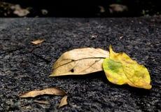Ξηρός βγάζει φύλλα Στοκ εικόνες με δικαίωμα ελεύθερης χρήσης