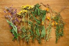 ξηρός Βοτανική ιατρική, phytotherapy ιατρικά χορτάρια στοκ εικόνες