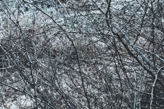 Ξηρός γραπτός ζιζανίων Στοκ Εικόνες