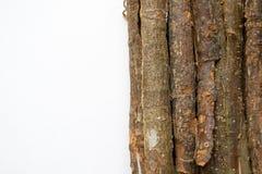 Ξηρός δρύινος φλοιός σε ένα άσπρο υπόβαθρο Quercus φλοιός quercus robur Στοκ Εικόνα