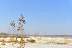 Ξηρός κάλαμος σε ένα θολωμένο υπόβαθρο της λίμνης και του μπλε ουρανού άνοιξη Στοκ Εικόνες