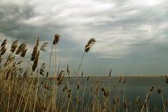 Ξηρός κάλαμος στην ακτή λιμνών Στοκ εικόνα με δικαίωμα ελεύθερης χρήσης