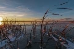 Ξηρός κάλαμος στον πάγο Στοκ εικόνες με δικαίωμα ελεύθερης χρήσης