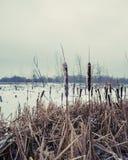 Ξηρός κάλαμος στον παγωμένο ποταμό Στοκ Φωτογραφία