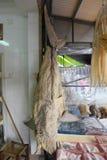 Ξηρός καρχαρίας για την πώληση στην Κίνα Στοκ Φωτογραφίες