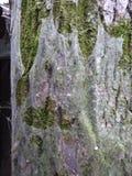 Ξηρός καφετής παλαιός εξαθλιωμένος στοκ φωτογραφία με δικαίωμα ελεύθερης χρήσης