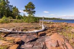 Ξηρός κλάδος στην ακτή της λίμνης μπροστά από ένα δάσος στοκ εικόνες