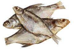 Ξηρός κριός ψαριών σε ένα άσπρο υπόβαθρο Στοκ εικόνα με δικαίωμα ελεύθερης χρήσης