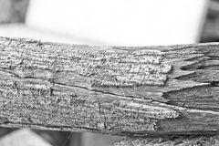 Ξηρός κλάδος δέντρων, μονοχρωματικός στοκ φωτογραφία με δικαίωμα ελεύθερης χρήσης