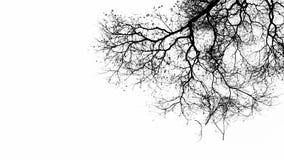 Ξηρός κλάδος δέντρων σε γραπτό Στοκ Φωτογραφία