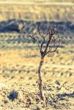 Ξηρός κλάδος δέντρων στην άμμο Στοκ φωτογραφία με δικαίωμα ελεύθερης χρήσης