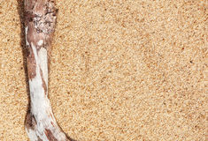 Ξηρός κλάδος στην άμμο Στοκ Φωτογραφία