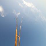 Επίτευξη για τον ουρανό Στοκ Εικόνες