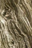 ξηρός παλαιός έξω κορμός δέν&tau Στοκ εικόνες με δικαίωμα ελεύθερης χρήσης