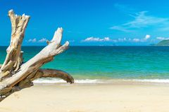 Ξηρός παλαιός κλάδος κάτω από το φως του ήλιου στην παραλία κοντά στη θάλασσα στοκ φωτογραφία με δικαίωμα ελεύθερης χρήσης