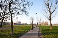 ξηρός πράσινος χειμώνας δέν&tau Στοκ Εικόνα