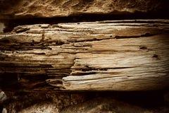 Ξηρός, σάπισε παλαιός ξύλινος τοίχος δέντρων Στοκ Φωτογραφίες