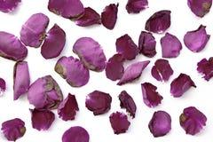 Ξηρός στενός επάνω υποβάθρου τριαντάφυλλων Στοκ φωτογραφίες με δικαίωμα ελεύθερης χρήσης